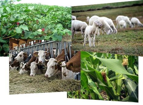 αγροτοκτηνοτροφικά