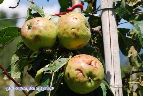 mela-grandin