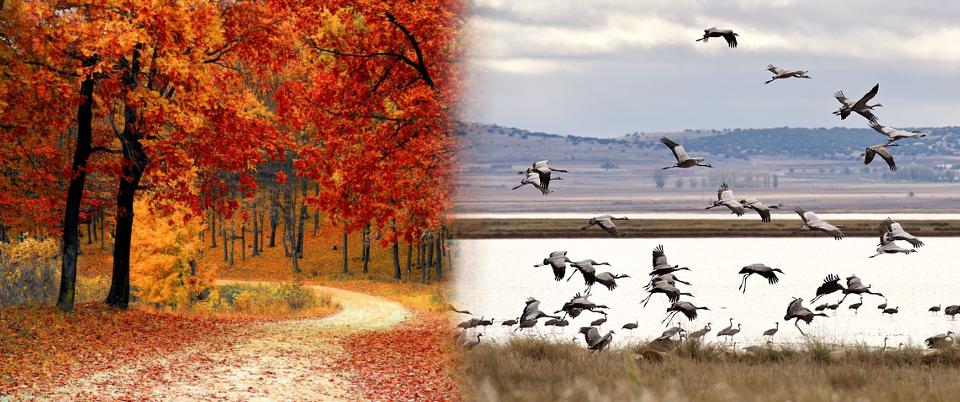 Φύση, Διαχείριση Προστατευόμενων Περιοχών