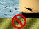 Π.Ε. Ημαθίας: μέτρα προστασίας από τα κουνούπια