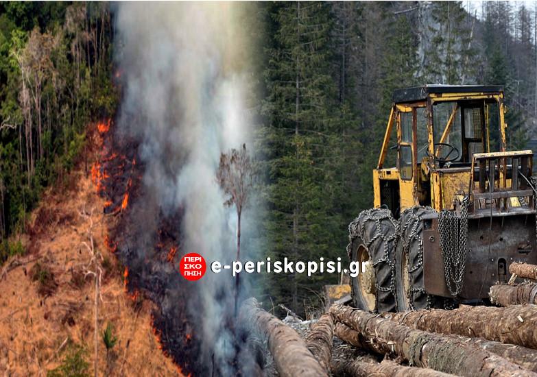δάση φωτιές υλοτομία
