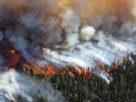 πυρκαγιές δάση