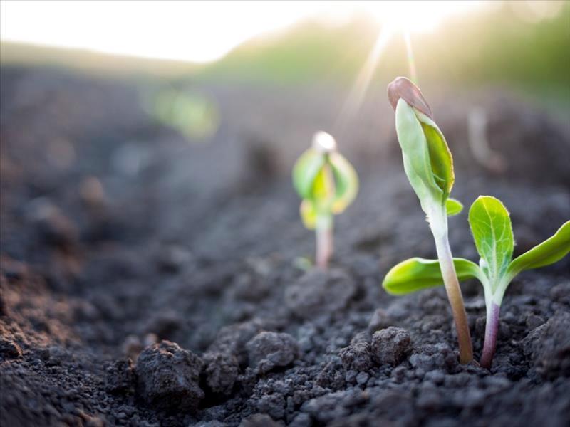 φυτό αγροτικά ΥΠΑΑΤ