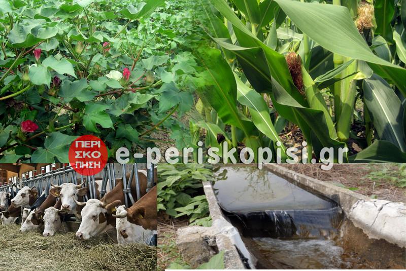 """Ανακοίνωση της """"Επιτροπής Αγώνα Αγροτοκτηνοτρόφων Δήμου Αλεξάνδρειας"""""""