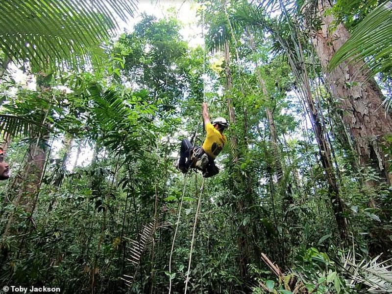 ψηλότερο δέντρο του κόσμου