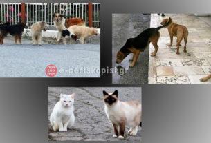 Δήλωση του δημάρχου Νάουσας για το ζήτημα των αδέσποτων ζώων συντροφιάς