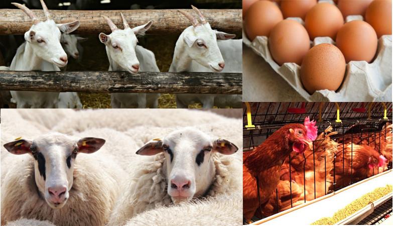 Υποχρεωτική καταγραφή αποθεμάτων αιγοπρόβειου κρέατος και αυγών