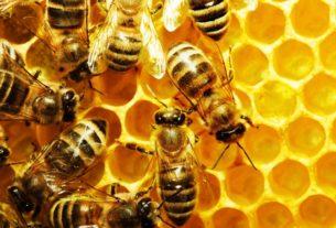 Π.Ε Ημαθίας: ανακοινώσεις για μελισσοκόμους