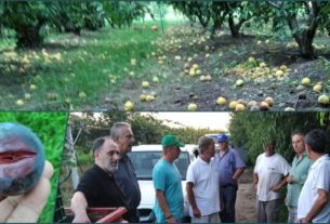 """Α.Σ. Νάουσας """"Μ. Αντύπας"""": μεγάλες οι ζημιές σε καλλιέργειες ροδάκινων, δαμάσκηνων, επιτραπέζιων σταφυλιών"""
