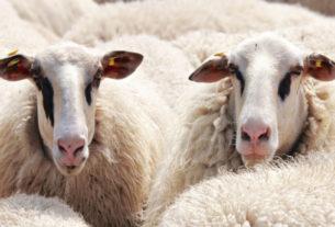 Ενισχύσεις σε κτηνοτρόφους από το ΥΠΑΑΤ