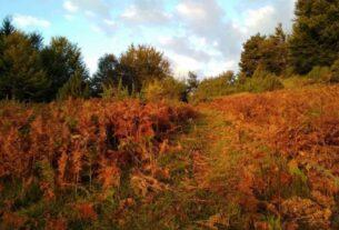 Διάνοιξη και σήμανση μονοπατιών στον ορεινό όγκο του Βερμίου
