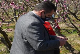 """Αντιπεριφερειάρχης Ημαθίας:""""πρωτοφανής καταστροφή των αγροτικών καλλιεργειών απ' τον παγετό"""""""
