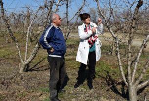 """Καρασαρλίδου: """"Άμεση ικανοποίηση των αιτημάτων των αγροτικών φορέων για τις ζημιές από τον παγετό"""